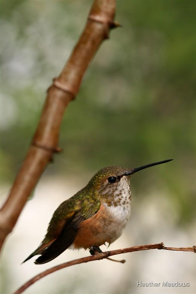 Hummingbird by Heather Meadows