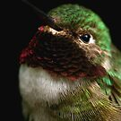 Hummingbird Profile by Heather Meadows