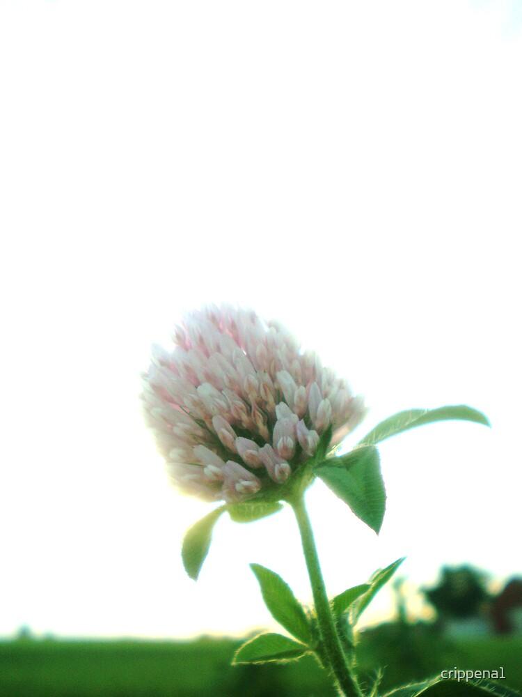 White Flower by crippena1
