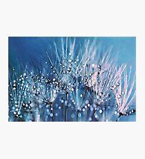 Dew on dandelions Photographic Print
