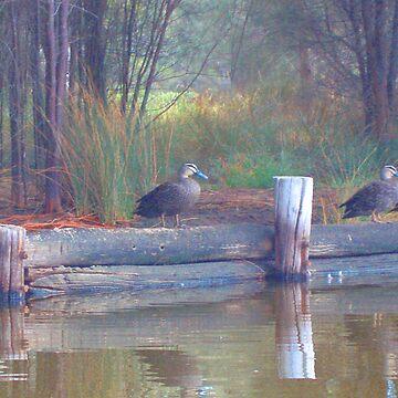 Ducks on the Swan by Carolyn