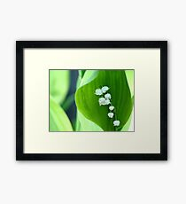 Lilly of the Valley Framed Print