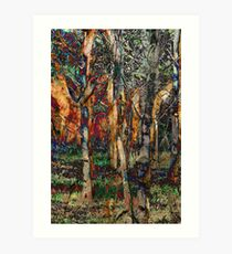 Late afternoon forest Art Print