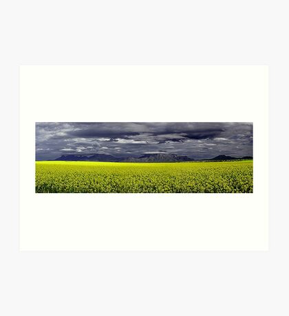 Storm Over The Canola Field  Art Print