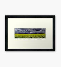 Storm Over The Canola Field  Framed Print