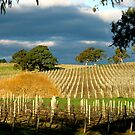Howard Vineyard - Adelaide Hills by Leeo