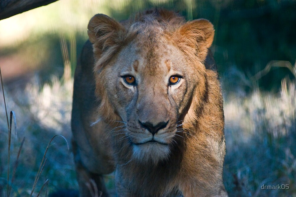 Stalking You by drmark05