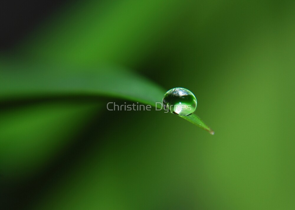Drop by Christine Dyrnes