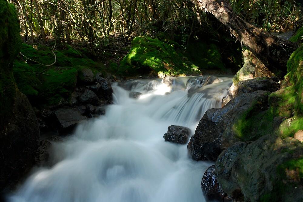 Tongariro Forest Falls by Rupert