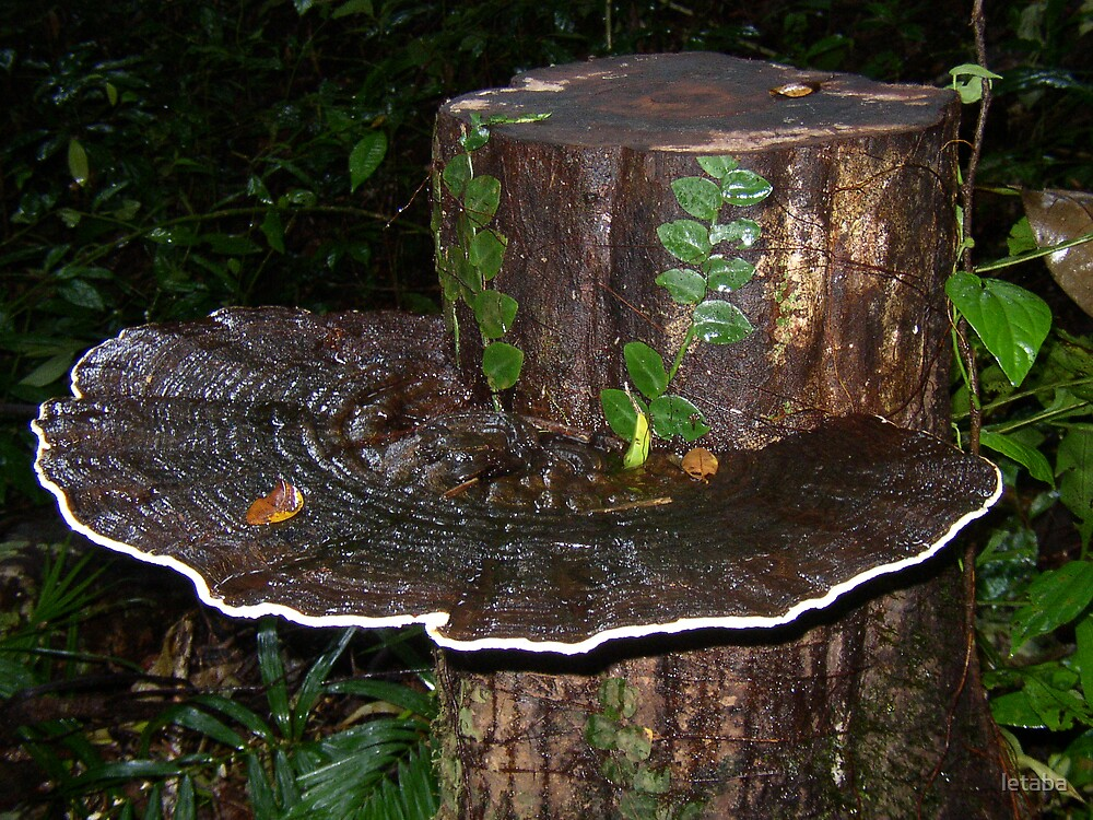 Rainforest Fungi by letaba
