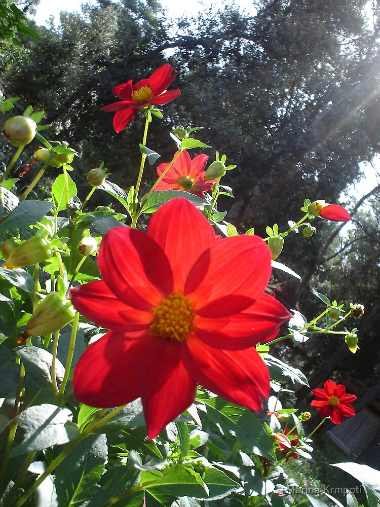 Flowerish by Marina Krmpotić