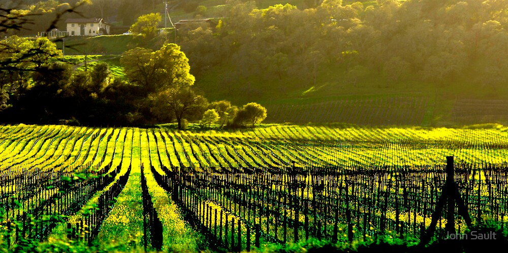 Napa Wineries  by John Sault