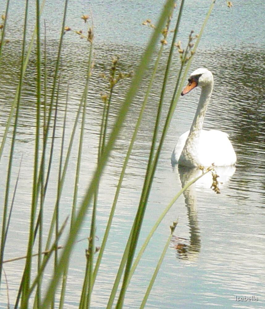 swan1 by Isebella
