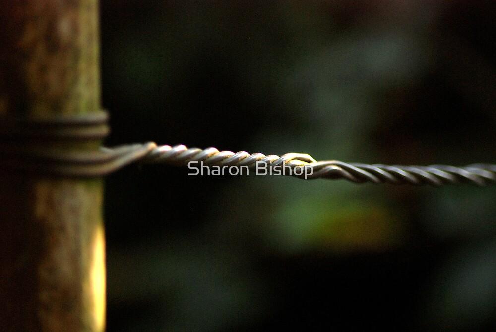 heavenly twist by Sharon Bishop