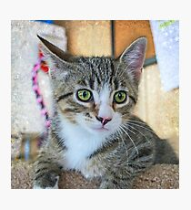 Green Eye Cute Tabby Kitten Photographic Print