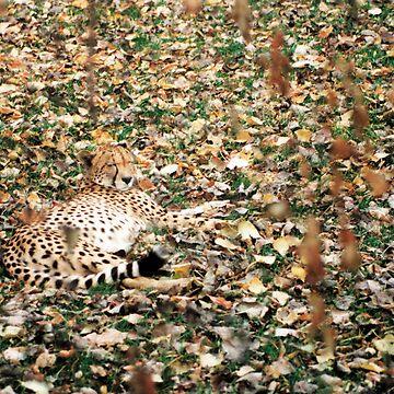 Spot Me?? by treelimb