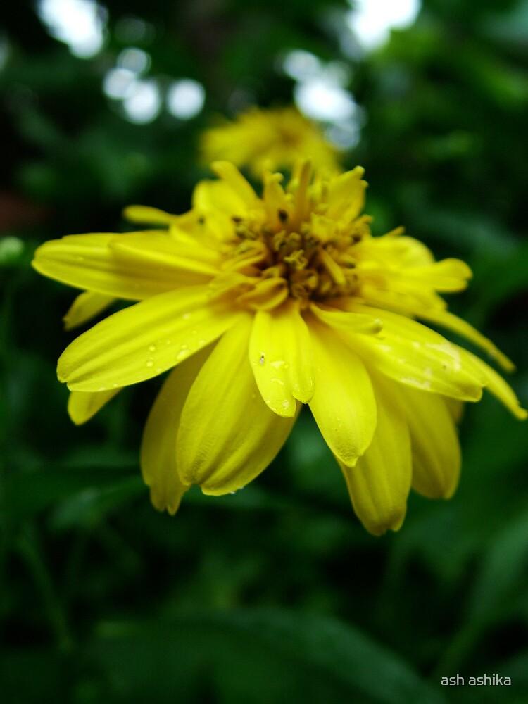 yellow flower by ash ashika