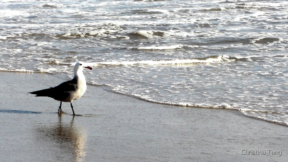 Watchful Seagull Taking a Walk by Christina Tang