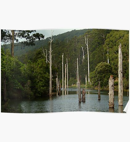 Lake Elizabeth Otway's Poster