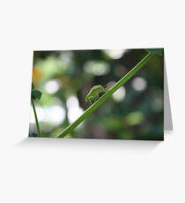 green bug on tree limb Greeting Card