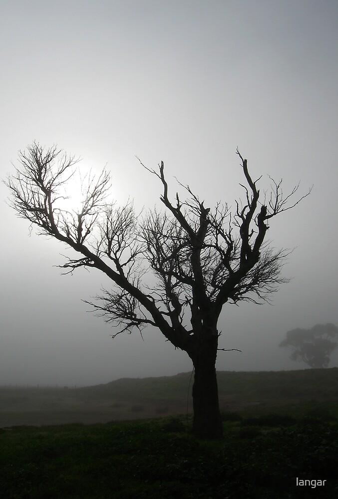Foggy Morn... by langar
