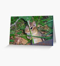 landscapephotocomp  Greeting Card