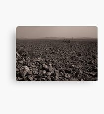 Desolate, Desperate and Dehydrated Canvas Print