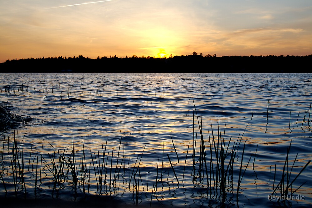 Sparrow Lake Sunset by David Bridle