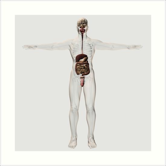 Láminas artísticas «Ilustración médica del sistema digestivo ...