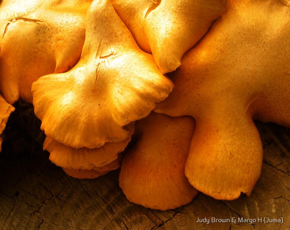 fungi by Judy Brown & Margo H (Juma)