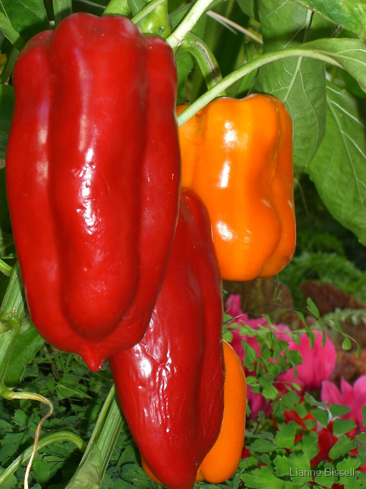 Peppers by Lianne Bissell