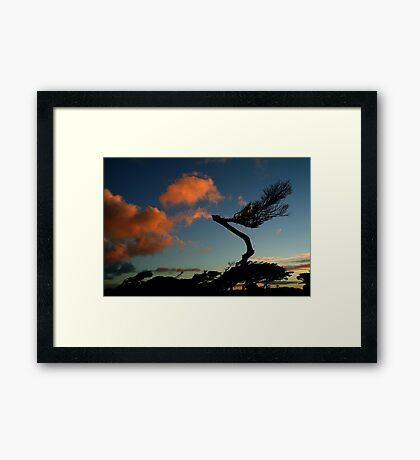 Wind Swept, Torquay,Start of the Great Ocean Road Framed Print