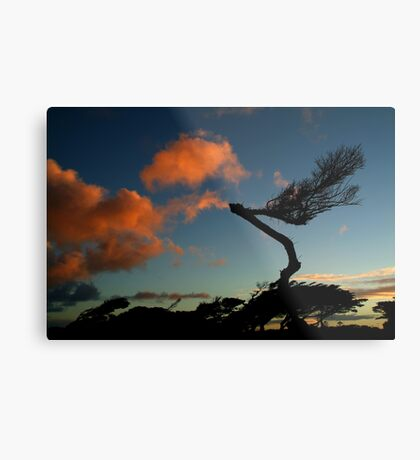 Wind Swept, Torquay,Start of the Great Ocean Road Metal Print
