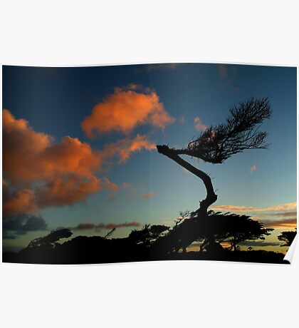 Wind Swept, Torquay,Start of the Great Ocean Road Poster