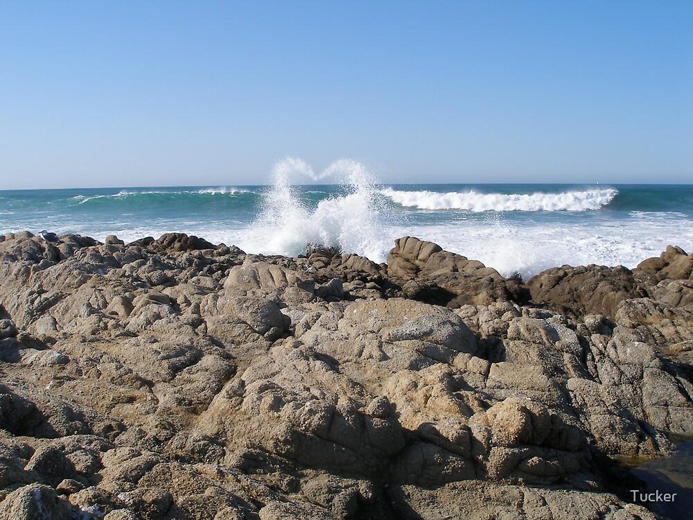 Ocean Heart by Tucker