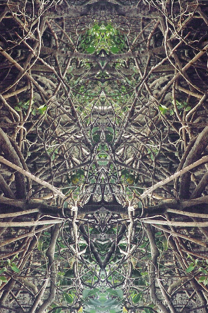 Mangrove rhythms, portrait no. 1 by Norma Chalmers
