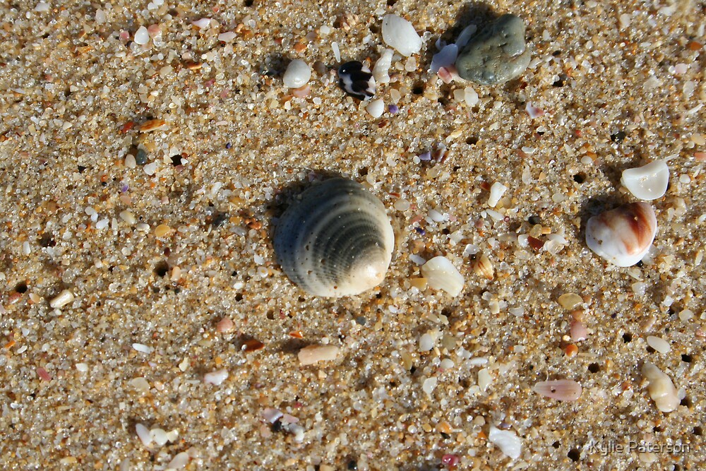 Shells on the beach by Kylie Paterson
