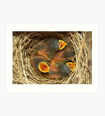 Baby blue birds Art Print