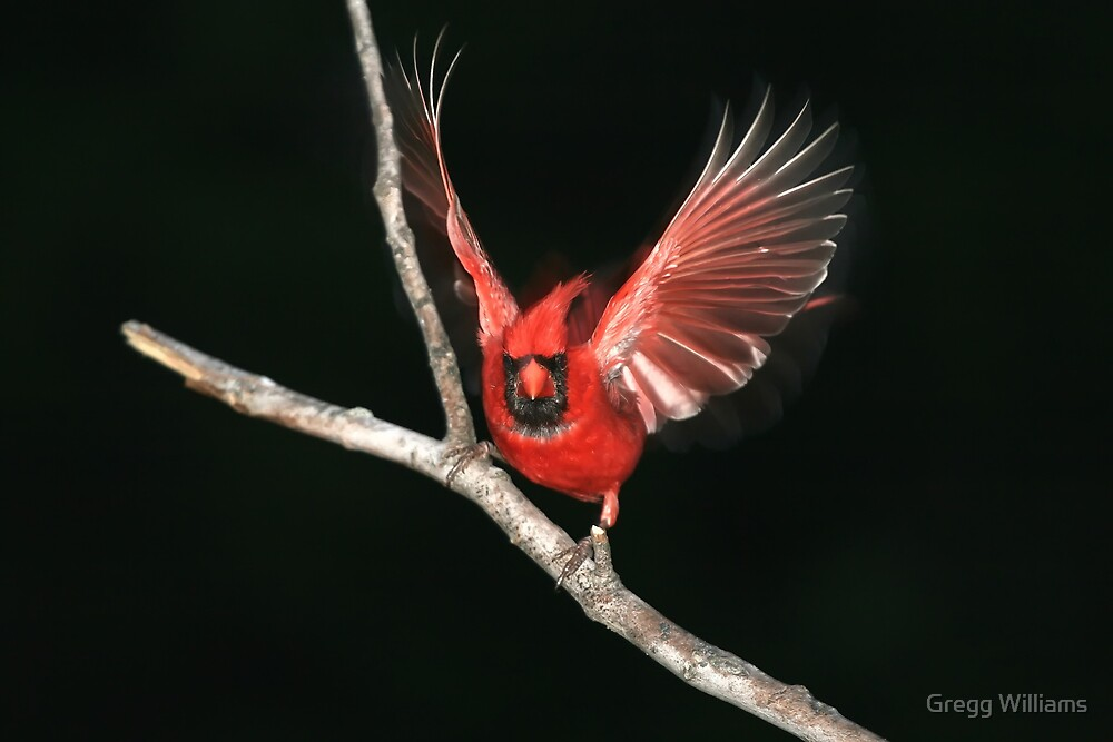 Night bird by Gregg Williams