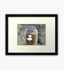 cutey groundhog Framed Print