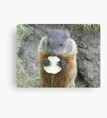 cutey groundhog Canvas Print