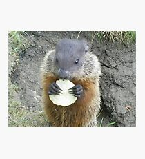 cutey groundhog Photographic Print