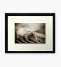 Lab Mouse Framed Print