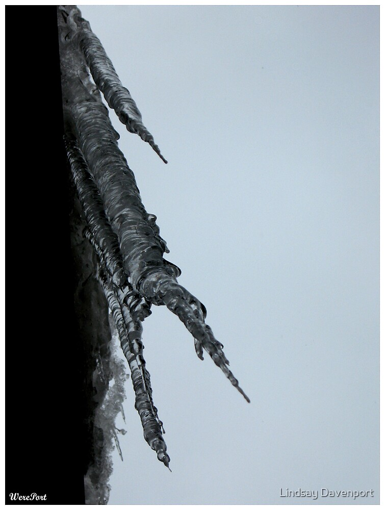 Icicles by Lindsay Davenport