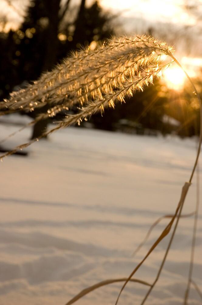 Sundrop by Lara Grauer