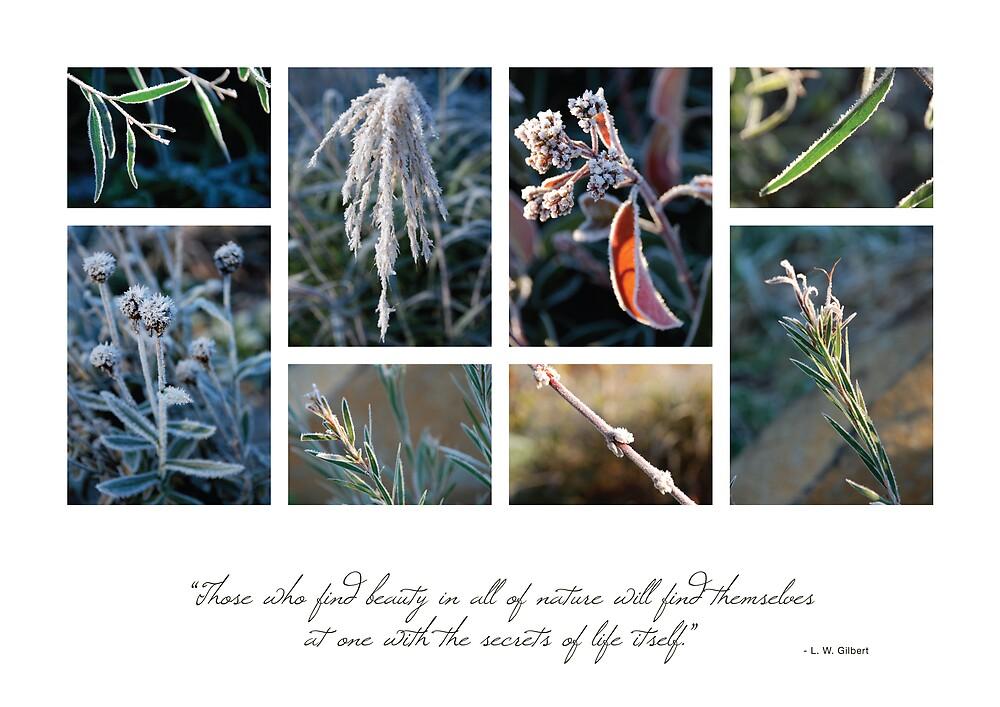 Frost 1 by Hazel Wallace