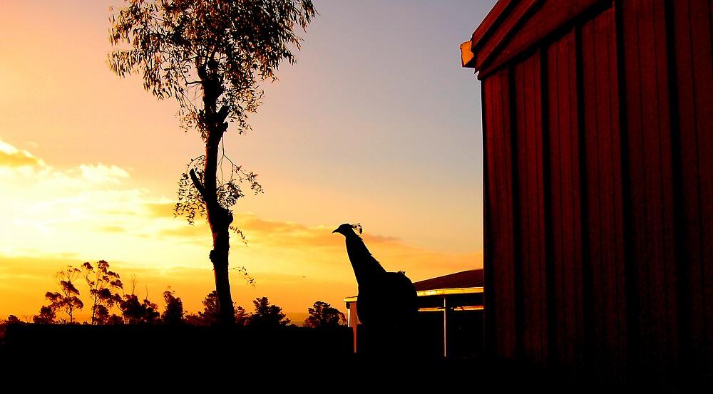 Amazing Bird by kdatta