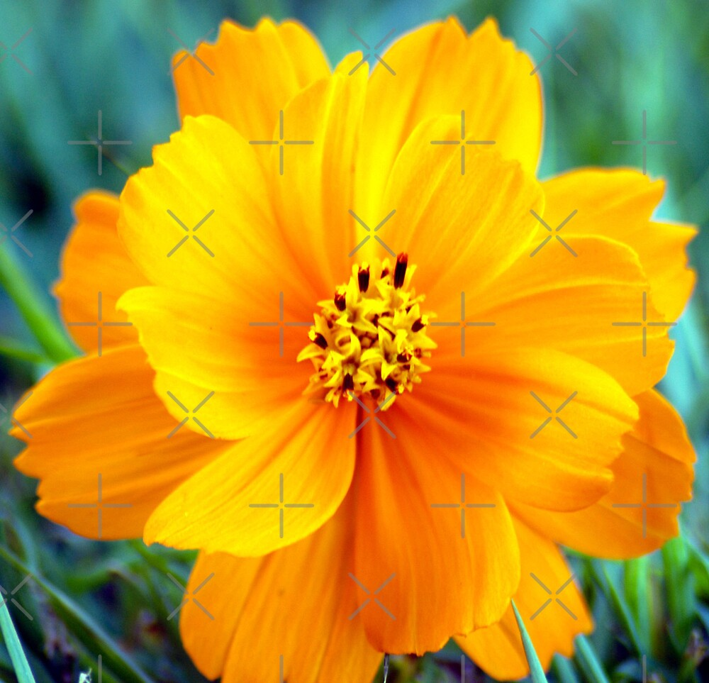 Yellow flower by Terry Williams