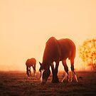 Early Mornings by Jemma Ryan