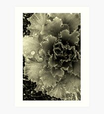 cabbage plant Art Print